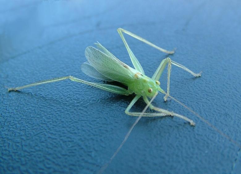 hulpeloos - Na een vervelling is zo&#039;n beestje even helemaal niks waard, vliegen gaat nog niet...<br /> Ongelukkig op een tuinstoel geland, geluk