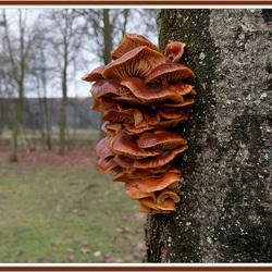 Een ganse familie paddenstoelen