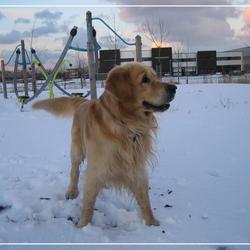 Gabber in de sneeuw