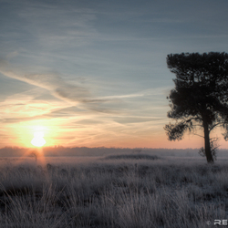 Winter op de Rielse heide