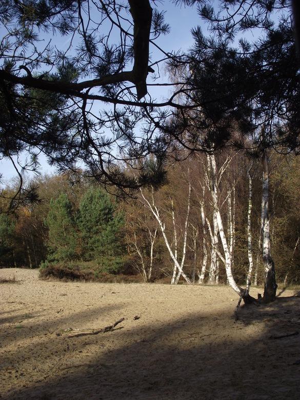 Zandverstuiving - Uitzicht op een zandverstuiving