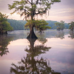 Reflectie bij Caddo Lake