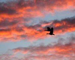 Kleurrijke lucht met ganzen