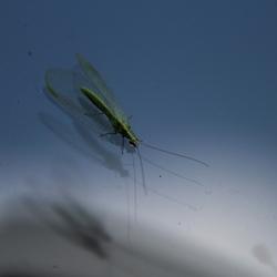 Insect op raam