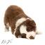 puppy webkopie
