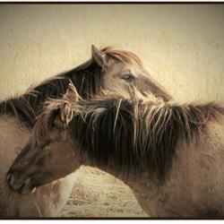 Konnikspaarden