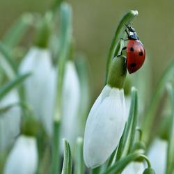 De lente begint