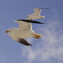 Vrijheid! Vliegen!