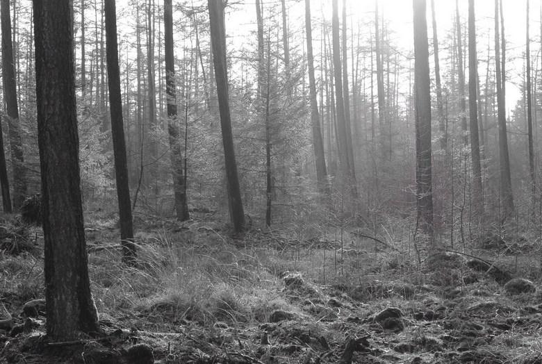 Bos in de winter -