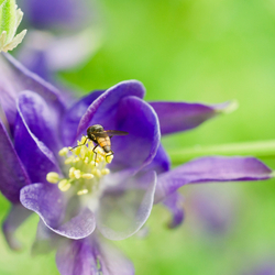 Insect on Flower