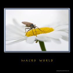 MACRO WORLD V
