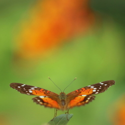 Vlinderparadijs