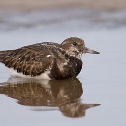 Gaan vogels in de winter ook in bad?