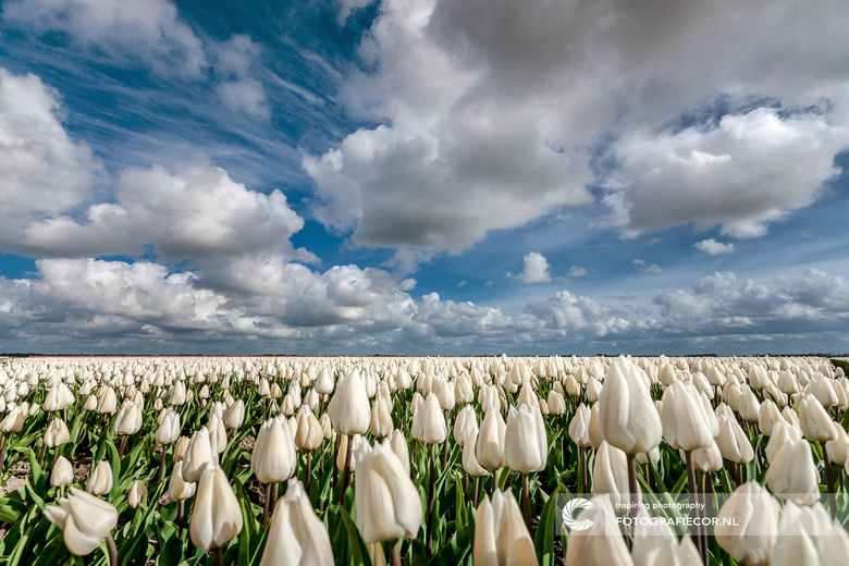Voorjaar in de polder - Binnenkort weer een beetje kruipen en zoeken tussen de tulpen tijdens het voorjaar. Altijd en leuke bezigheid op zoek naar dat