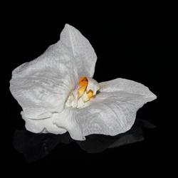 bloem van orchidee