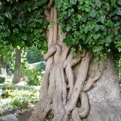 Ingewikkelde boom