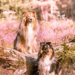 Daisy en Gytah bij de heide