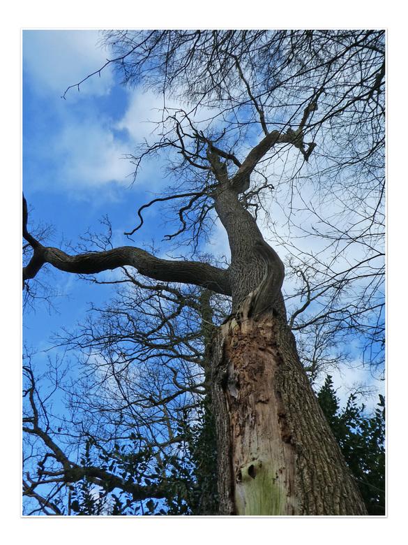 spechtenboom -  de vormen zijn in de winter altijd zo mooi te zien gr bets