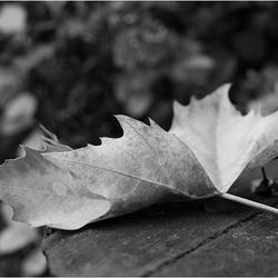 blad zwart wit Canon 650D test.jpg