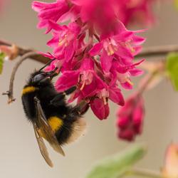 Lente-nektar