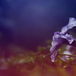 DSC_0396/flower