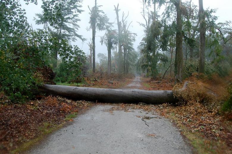 na de storm - n stukje natuur waar de storm duidelijk zijn sporen heeft achtergelaten er stond werkelijk geen boom meer recht