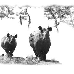 Nearly extinct ! (Madikwe SA)