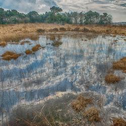 moerassig gebied