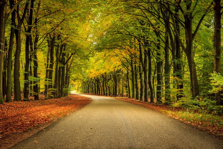 Herfst - Herfst.<br /> Hoog Buurloseweg bij Apeldoorn