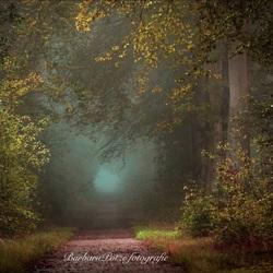 Herfst met mist in het bos