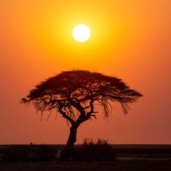Hét Afrika plaatje
