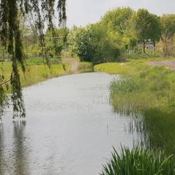 Natuurlijke oever 's Heerenhoek