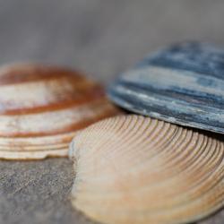 Trio di mare