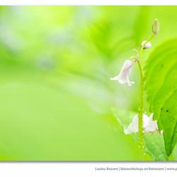 Fading green