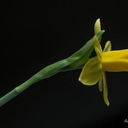 Yellow.......