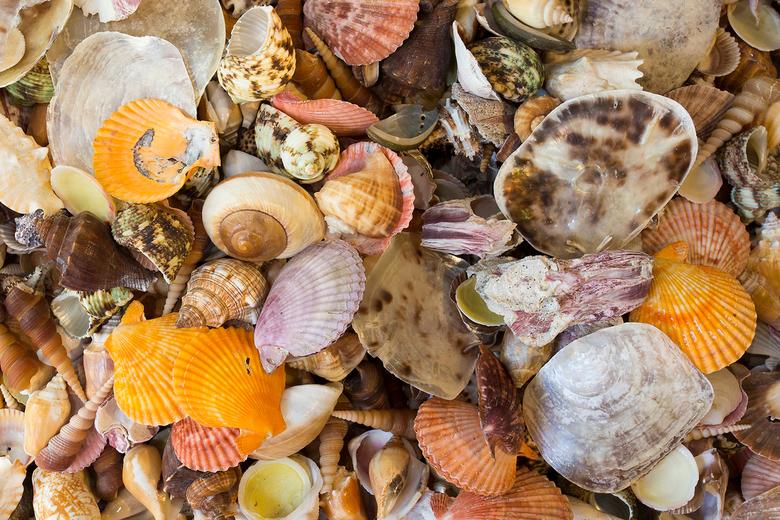 Schelpen op het strand - Schelpen op een strand in Californië