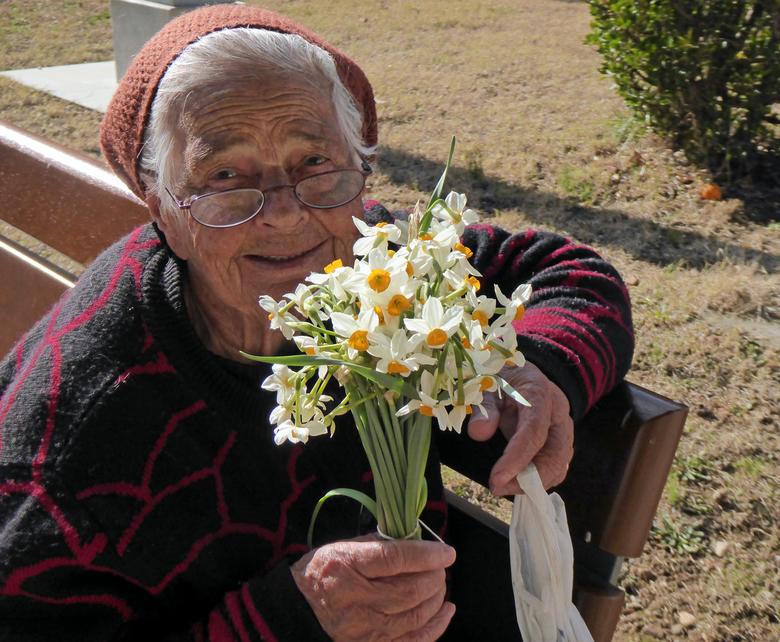 wilde narcissen voor een nieuw jaar - Ik gaf een bosje - zelf gekregen in ruil voor een foto - aan deze lieve vrouw die in het winterzonnetje in Spart