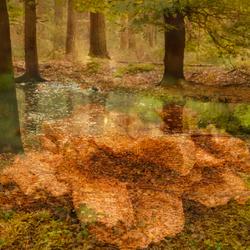 Mysterieuze herfst