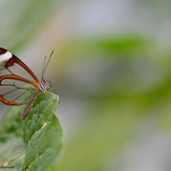 Vlinder kracht