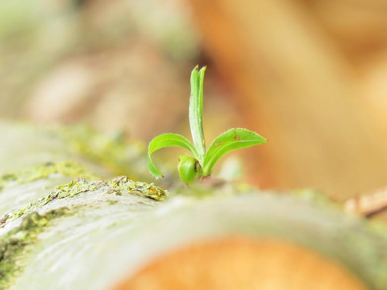 Die ene spruit - Het gekapte hout wilt niet opgeven. Ik heb de foto bewust overbelicht. Gestopt op het punt dat het plantje helder groen blijft, en de