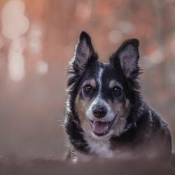 Baileys ... dog with spirit ...