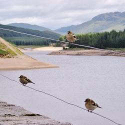 vogeltjes... in Schotland