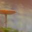 mushroom in heaven