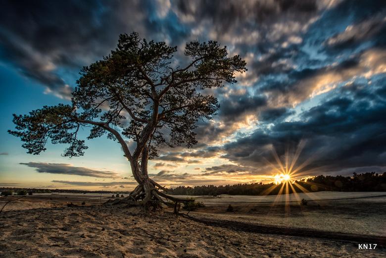 boom  - Kijk dan wat een heeerlijke foto ik gister van de zonsondergang maakte. Super trots op deze foto! Ik bereid me vaak goed voor op de foto die i