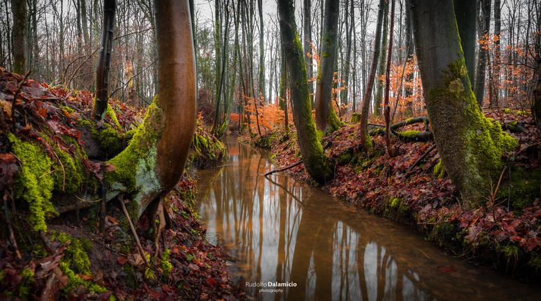 Where water flows - Heerlijk stuk bos in Duitsland, net over de grens bij Rekken. <br /> Een prachtige stroom, na lange tijd van droogte, vorm de bas