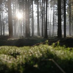 stilte in het bos