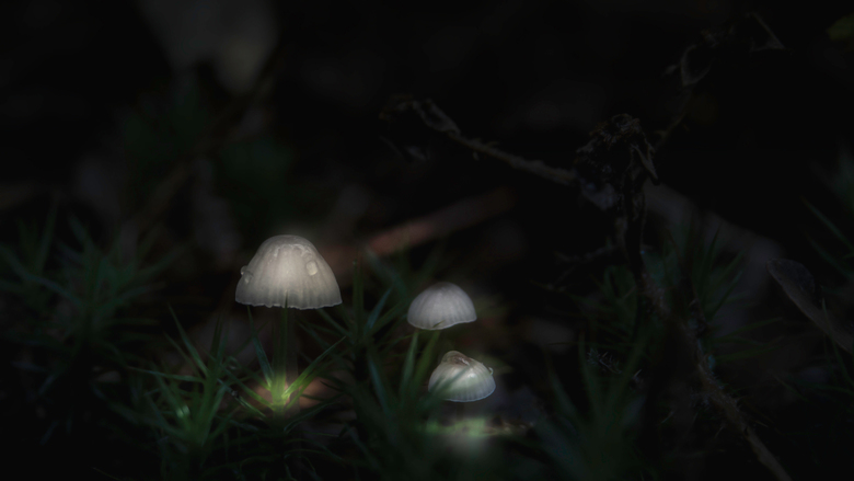 Macro paddenstoel - Bewerkt in Lightroom en Photoshop. Deze foto is genomen in Park Leyduin.