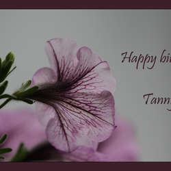 Voor Tanny