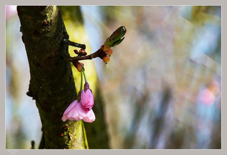 Lente in de Japanse tuin 12