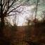 uitzicht bos